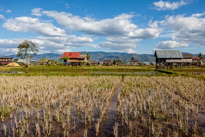 Dorf nahe des Inle Sees mit einem Reisfeld.