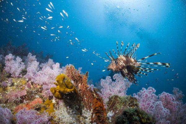 Die meisten Inseln sind von einzigartigen Korallenriffen umgeben, sodass es meist nur ein paar Schritte bedarf, um das Schnorchel-Erlebnis zu starten.