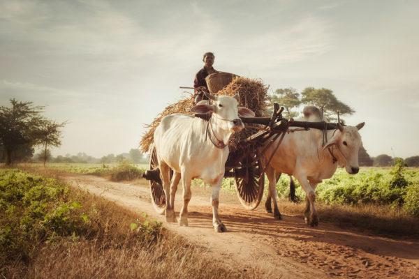 Die Rohingya sind eine muslimische Minderheit im überwiegend buddhistischen Myanmar (ehemals Birma oder Burma genannt). (Foto Shutterstock)