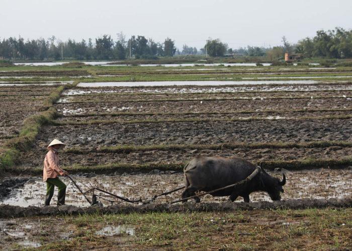 Reisbauern im Vietnam.