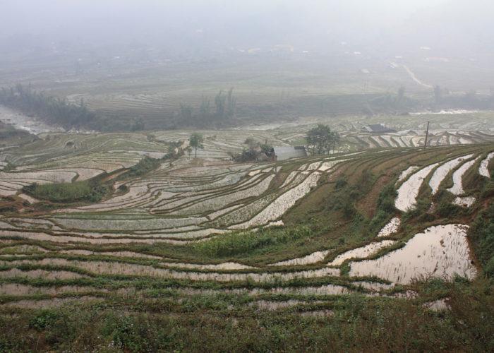 Reisterrassen im Norden des Vietnam.