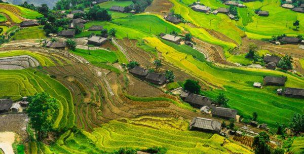 Reisfelder in Malaysia - eine der vielen Sehenswürdigkeiten im asiatischen Land Malaysia.