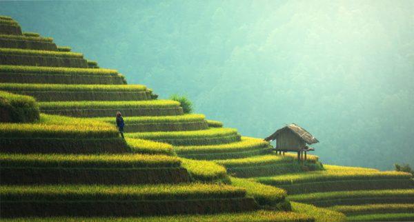 Reisterrassen in Thailand.